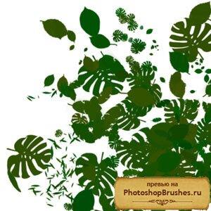 Кисти тропические листья