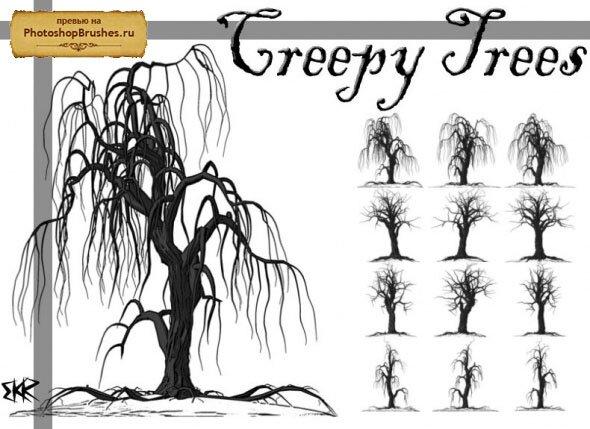 Кисти старые деревья