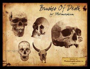 Кисти черепа