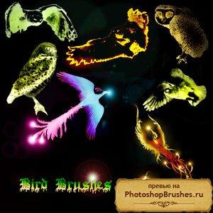 Кисти райские птицы