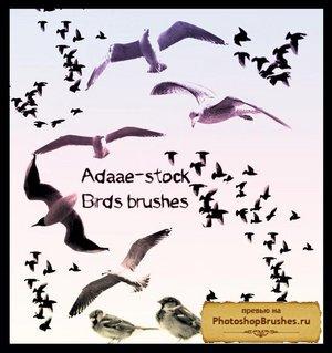 Кисти птицы