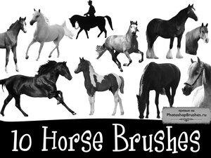 Кисти лошади