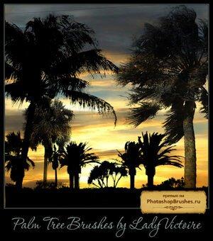Кисти пальмы