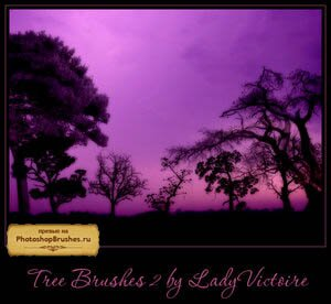 Кисти деревья саваны
