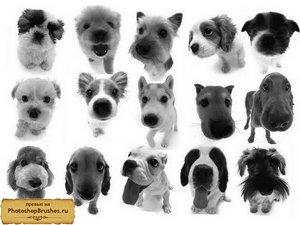 Кисти собачки