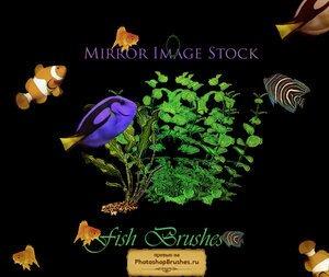 Кисти тропические рыбки
