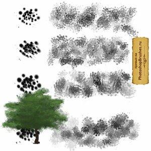 Кисти листва деревьев