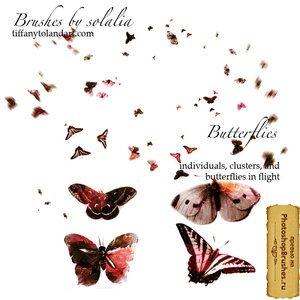 Кисти настоящие бабочки