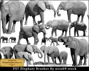 Кисти слоны