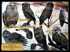 Кисти совы