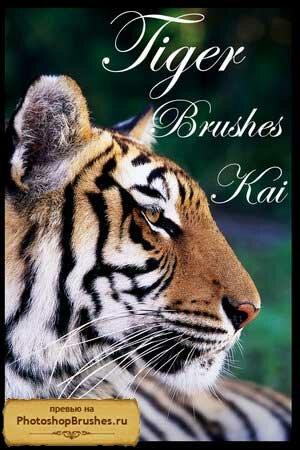 Кисти тигр