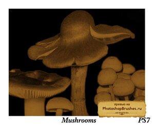 Кисти грибы